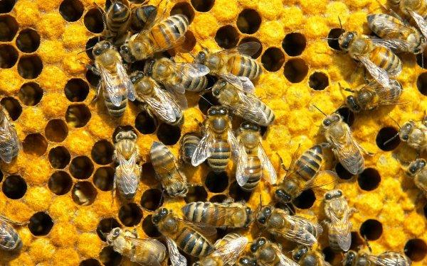 Пестициды могут угрожать пчелам