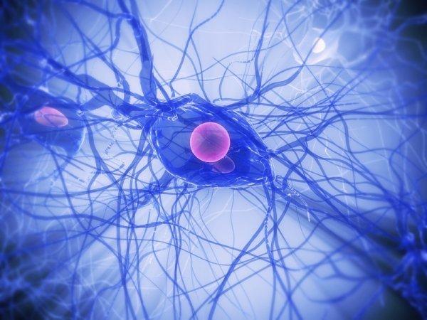 Новосибирские ученые создали искусственную модель болезни Хантингтона
