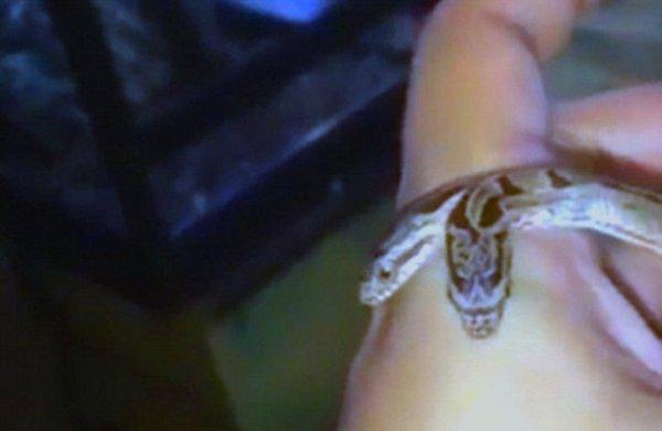 В Индии найдена двухголовая змея
