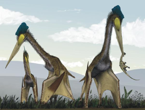 У Трансільванії & # 8205; вчені виявили останки гігантських птерозаврів