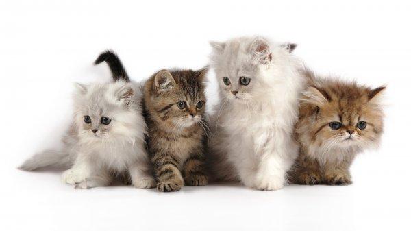 Ученые определили 5 типов характера у кошек