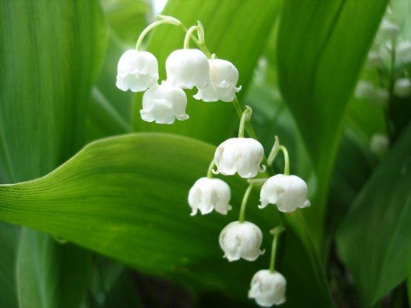 За 2016 год ученые открыли множество новых растений
