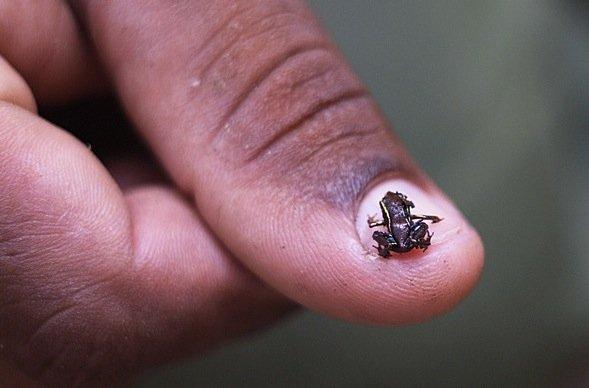 Индийские ученые нашли 7 новых видов лягушек