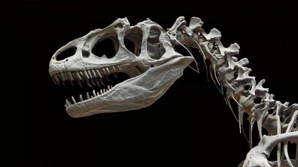 Ученые обнаружили в костях динозавра Юрского периода следы белков
