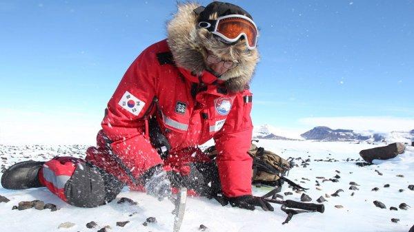 Ученые из Британии собираются отправиться в Антарктиду за метеоритами