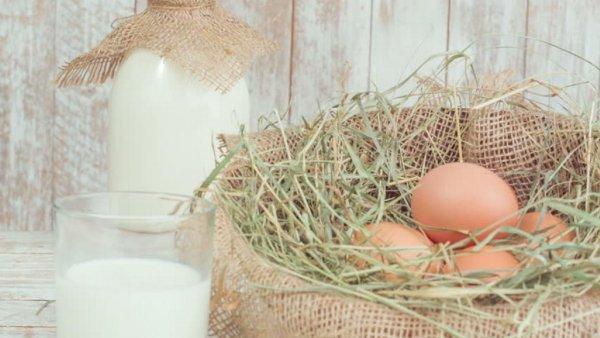 Создано молоко без коров и яйцо без курицы