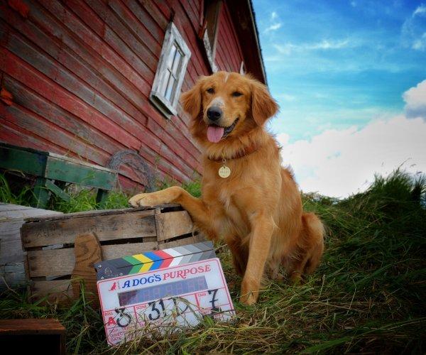 CNN заявили об отсутствии жестокого обращения с животными на съемках фильма «Собачья жизнь»