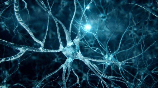 Ученые выяснили, как влияет музыка на мозг человека