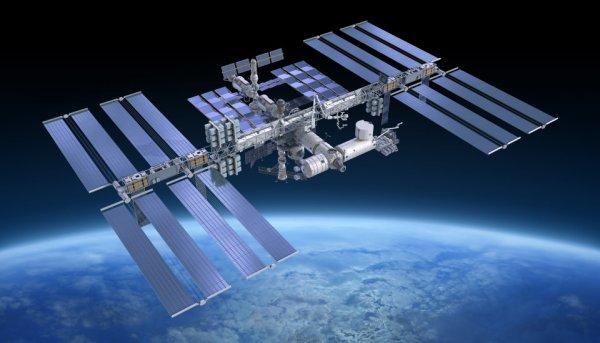 Водоросли из Антарктиды и Норвегии смогли выжить в космосе