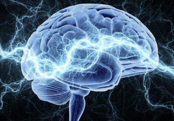 Ученые сообщили о новой аналогии в работе мозга и интернета