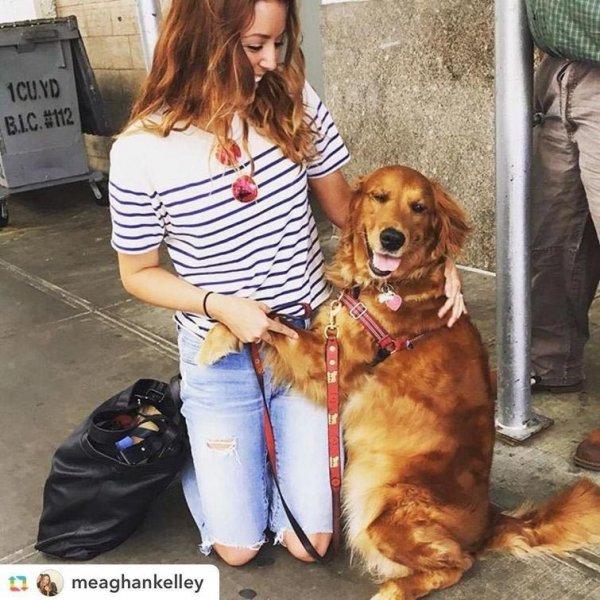 Любящая обниматься собака из Нью-Йорка стала звездой соцсетей