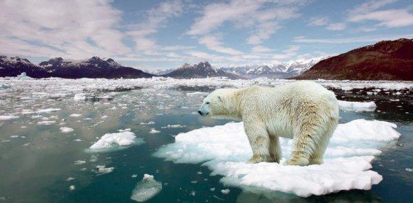 Ученые выяснили причину глобального потепления в российской Арктике