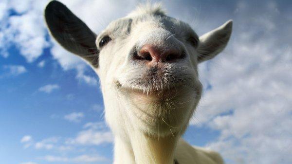 Ученые: Козы могут узнать друга по голосу