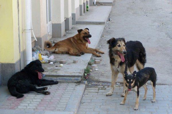В Туле сотрудники по отлову собак случайно снотворным попали в человека