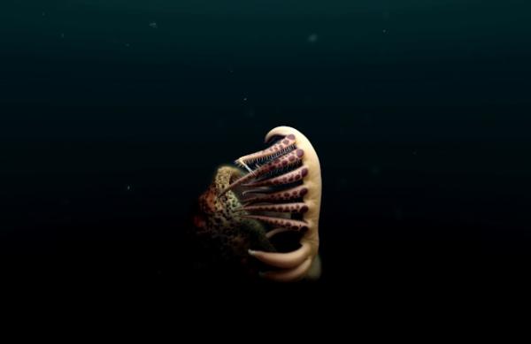 В Канаде нашли древнего червя-монстра с большими зубами