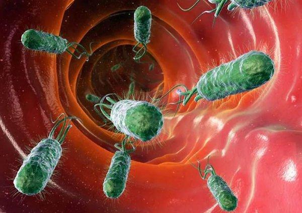 Кишечные бактерии могут спровоцировать депрессию