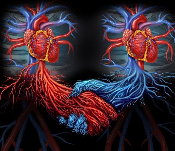 Ученые исследовали мутирующих людей с двумя сердцами
