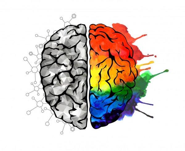 Учёные выяснили, откуда у человека берётся творческий потенциал