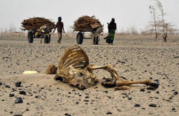 К 2050 году исчезнут леса на Земле и появится голод