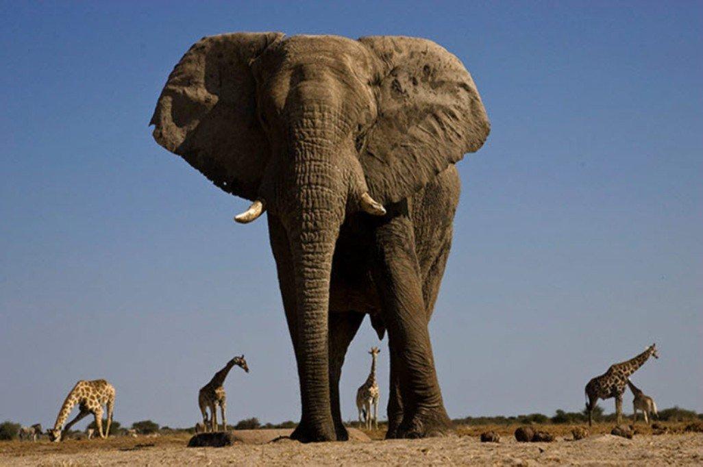сих самые большие животные мира фото крепится дополнительный