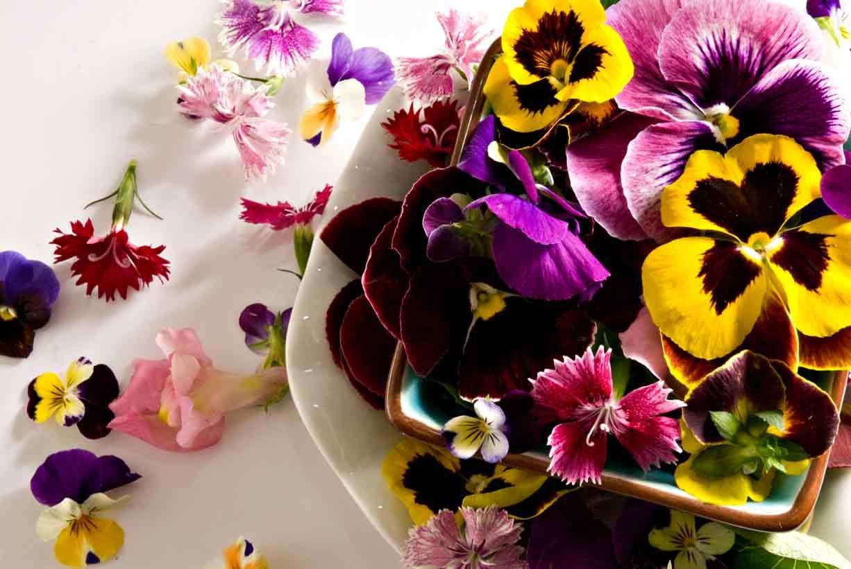 изготовления разрешено фото цветы кулинарные нем содержится