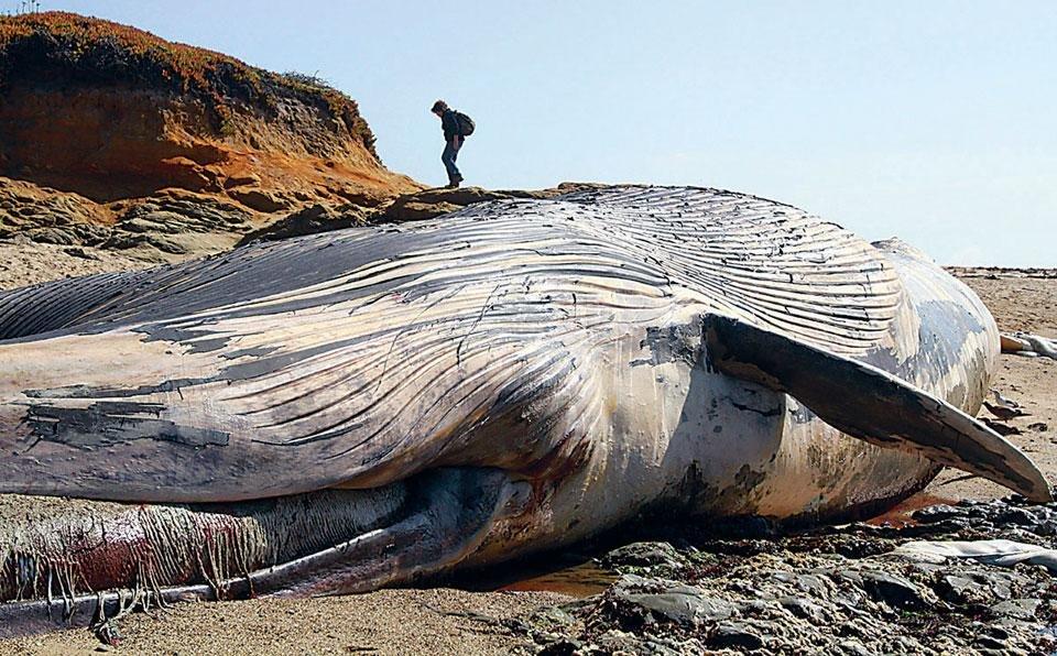 картинки гигантского кита очередной