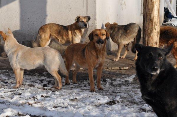 В Астрахани орудует стая бродячих собак