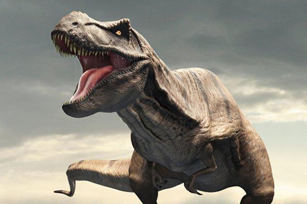 Ученые: Слишком тяжелый хвост динозавров стал причиной прямохождения