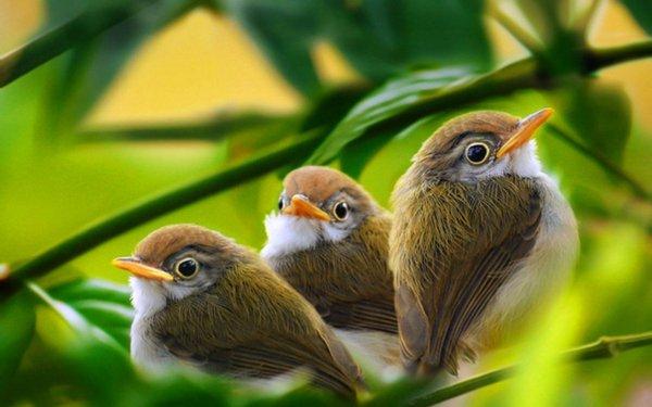 Медики заявили, что наблюдение за деревьями и птицами улучшает самочувствие человека