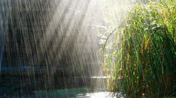 Стала известна причина приятного аромата воздуха после дождя