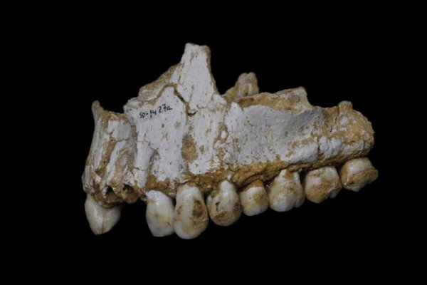 Ученые: Неандертальцы лечились природным аспирином и пенициллином