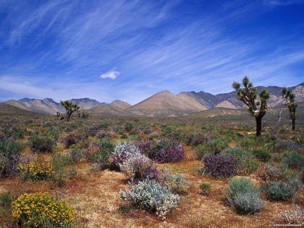 """Эксперты: Калифорнийские пустыни переживают """"супер цветение"""""""