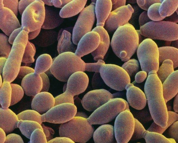 Ученые создали новую хромосому сложного организма