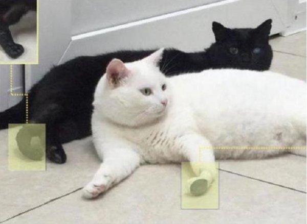 В России двум котам имплантировали конечности