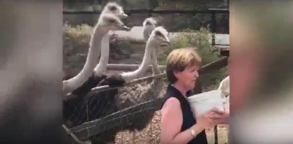 В Сети обсуждают видео с участием англичанки и страусов