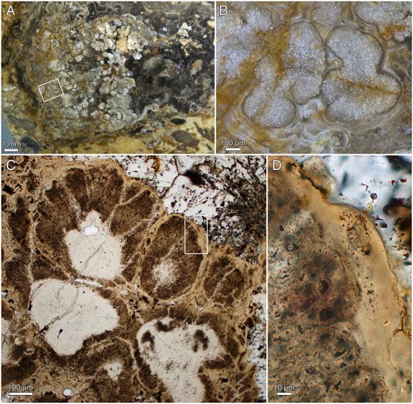 Палеонтологи нашли древнейшие останки растений