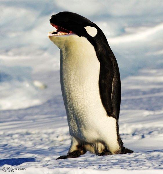 Ученые: В Антарктиде оказалось на 3,6 млн пингвинов больше