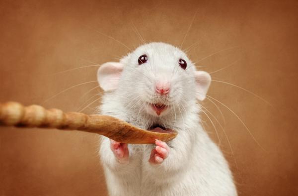 главной функцией умеют ли крысы смеяться рынке много компаний