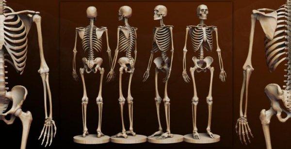 Канадские учёные раскрыли тайну «тяжёлой кости»