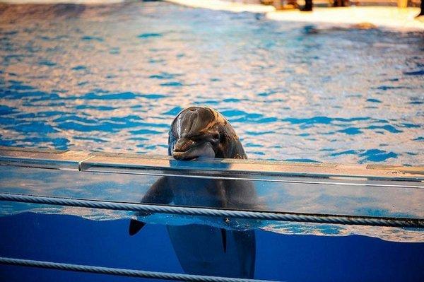 Ученые возьмут кровь дельфинов из Приморского океанариума на анализ