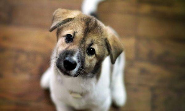 Эксперты рассказали, как правильно определить возраст собаки