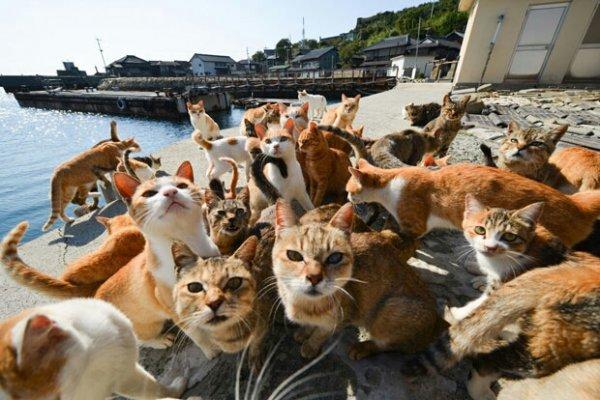 Учёные: Коты больше любят общение с людьми, чем еду