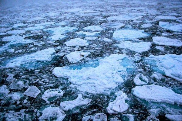 Ученые выяснили, по какой причине лед в Арктике зеленый