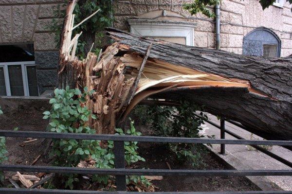 В Москве дерево рухнуло на детскую площадку