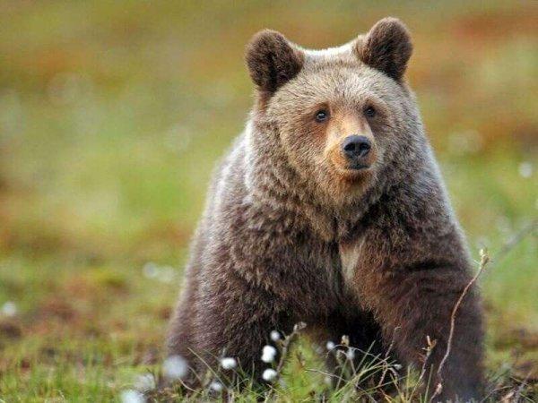 Житель Ямала оседлал медведя