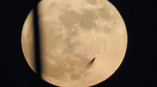 В Сети появилось видео ползущего по Луне НЛО