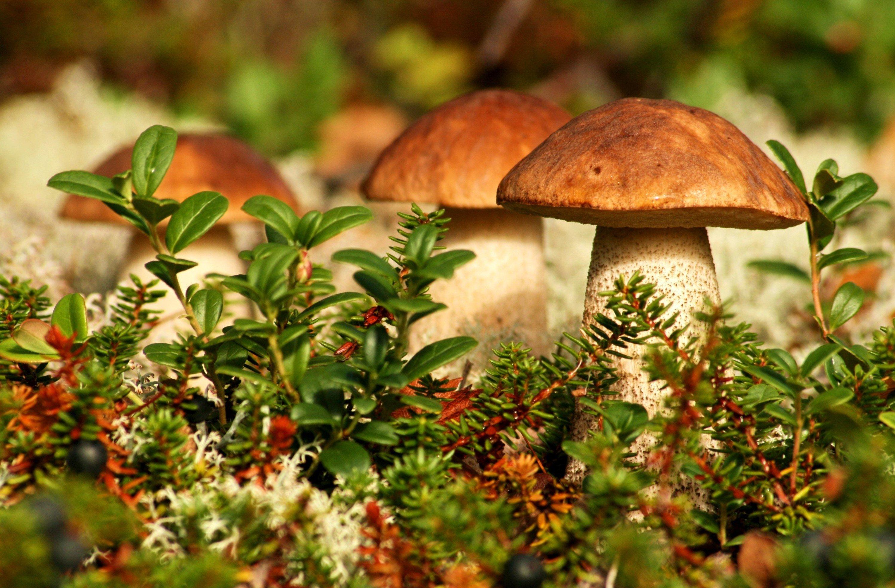 Секс под галлюциногенными грибами