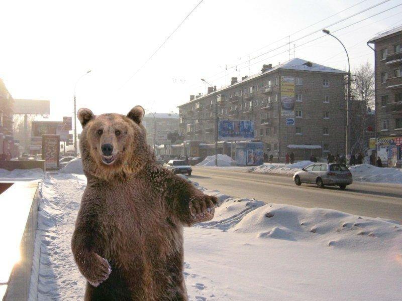 Медведь гулял ночью вгородском парке Медногорска