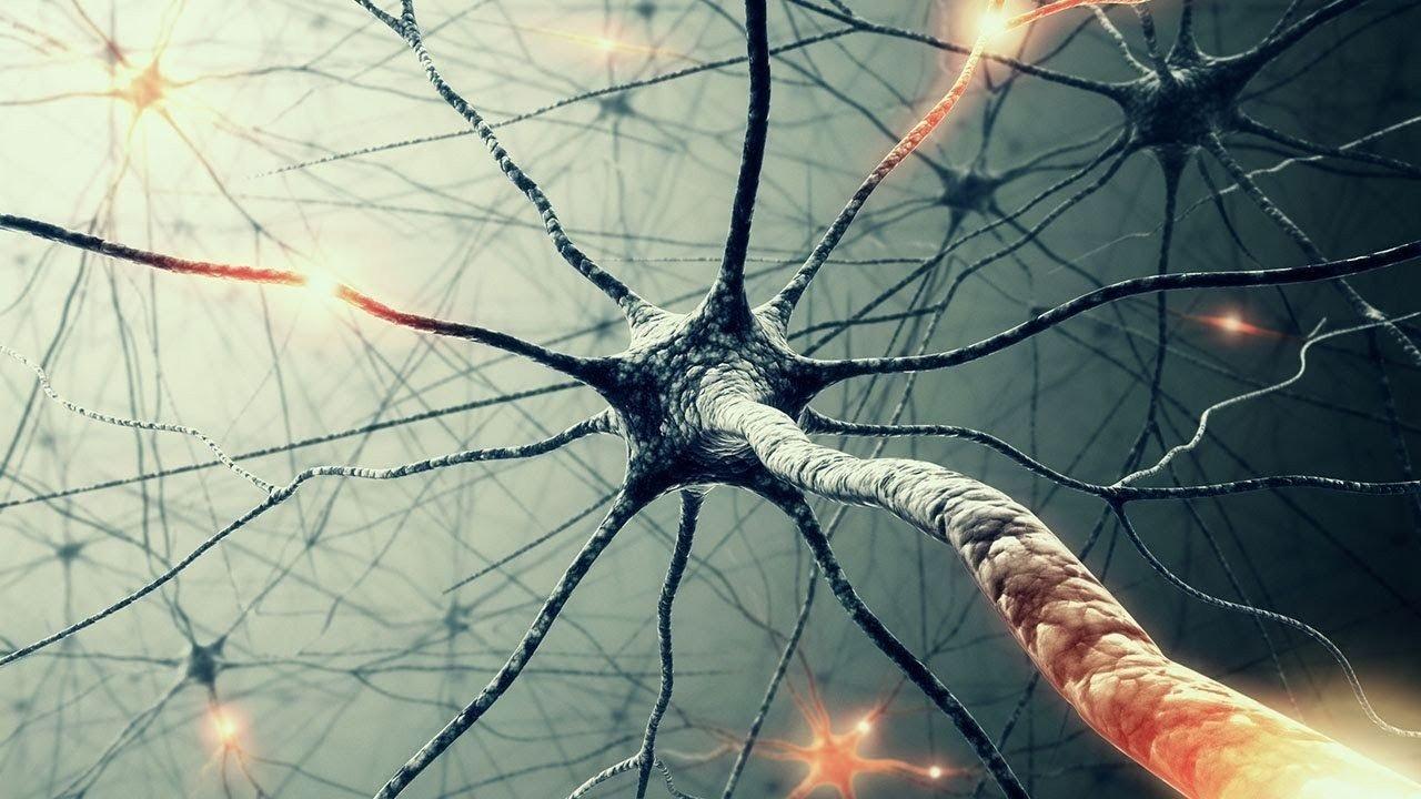 Ученые узнали, как остановить рассеянный склероз