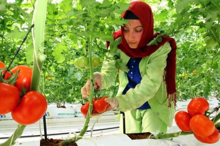 Дворкович назвал условие возврата турецких помидоров в РФ